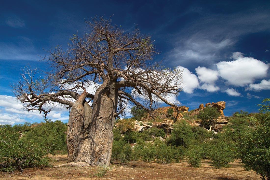 Essential African Safari 1