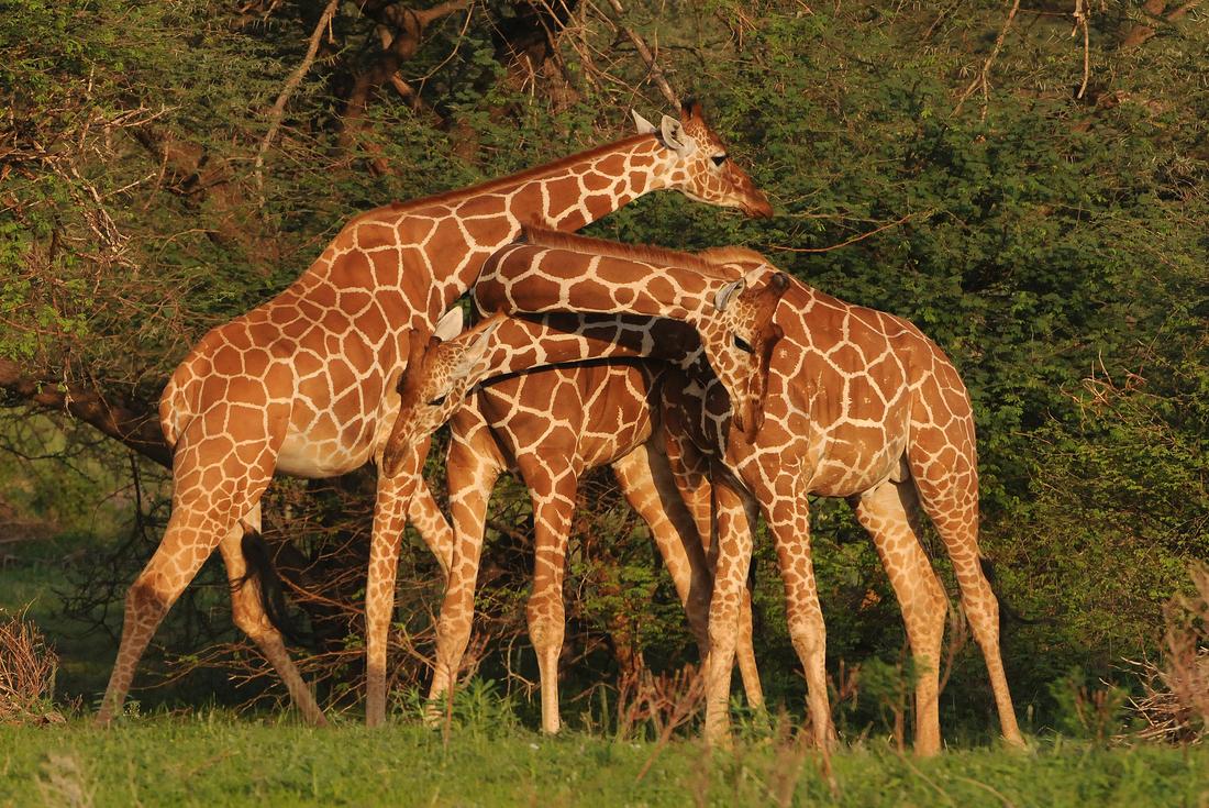 Northern Kenya & Untouched Ethiopia 3