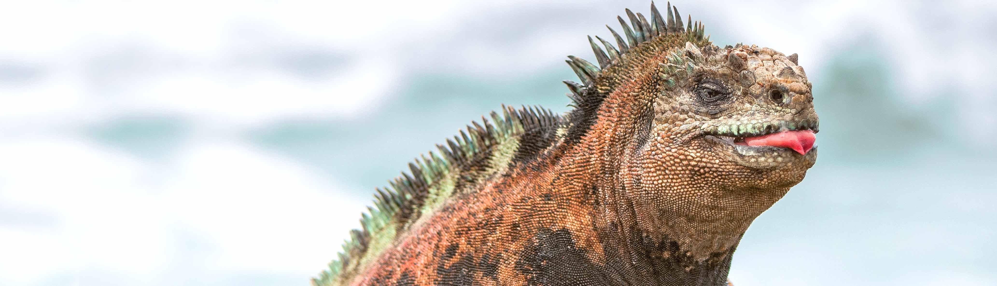 Galapagos Explorer: Southern Islands (Grand Queen Beatriz)