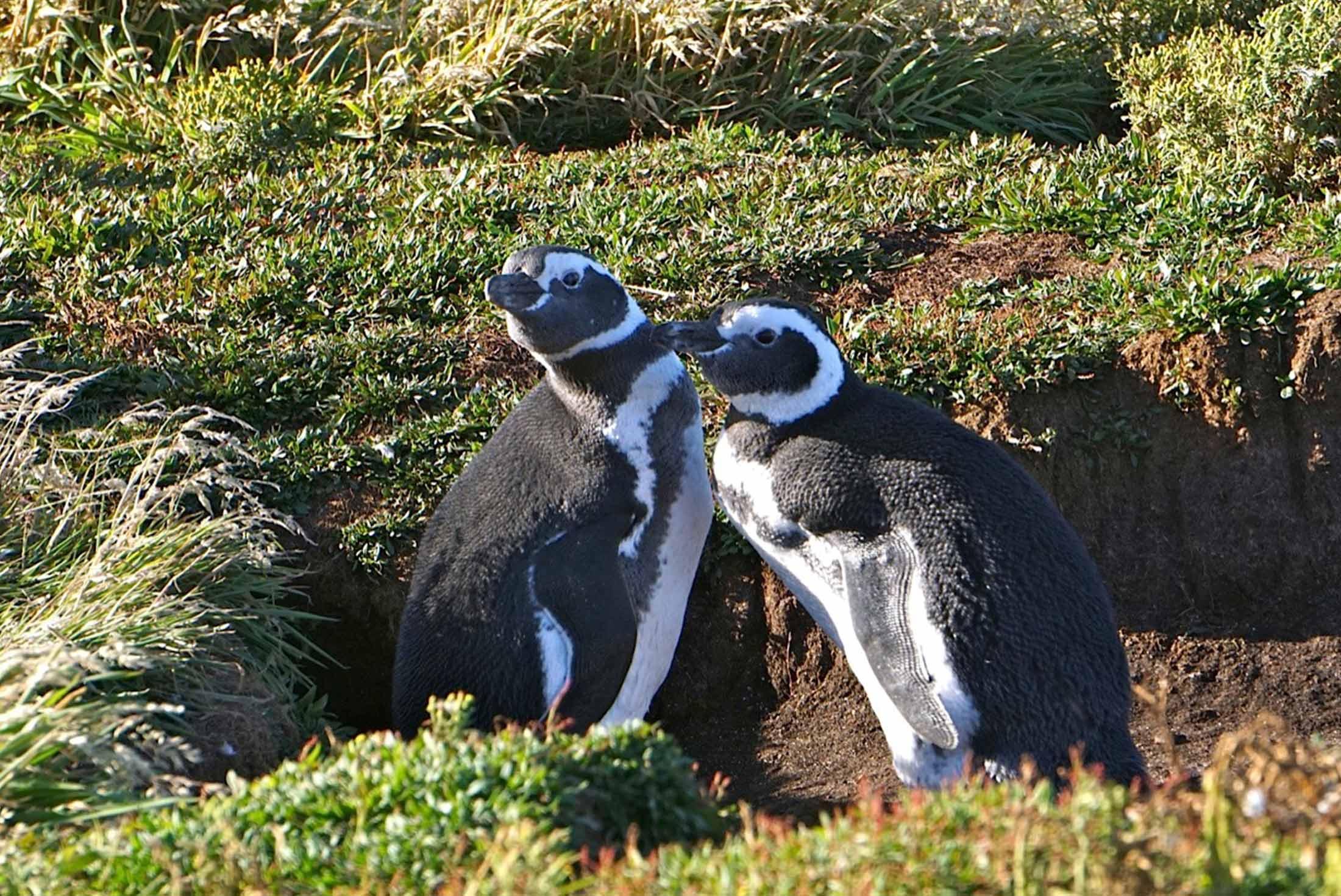 Falkland Islands Discovery 4