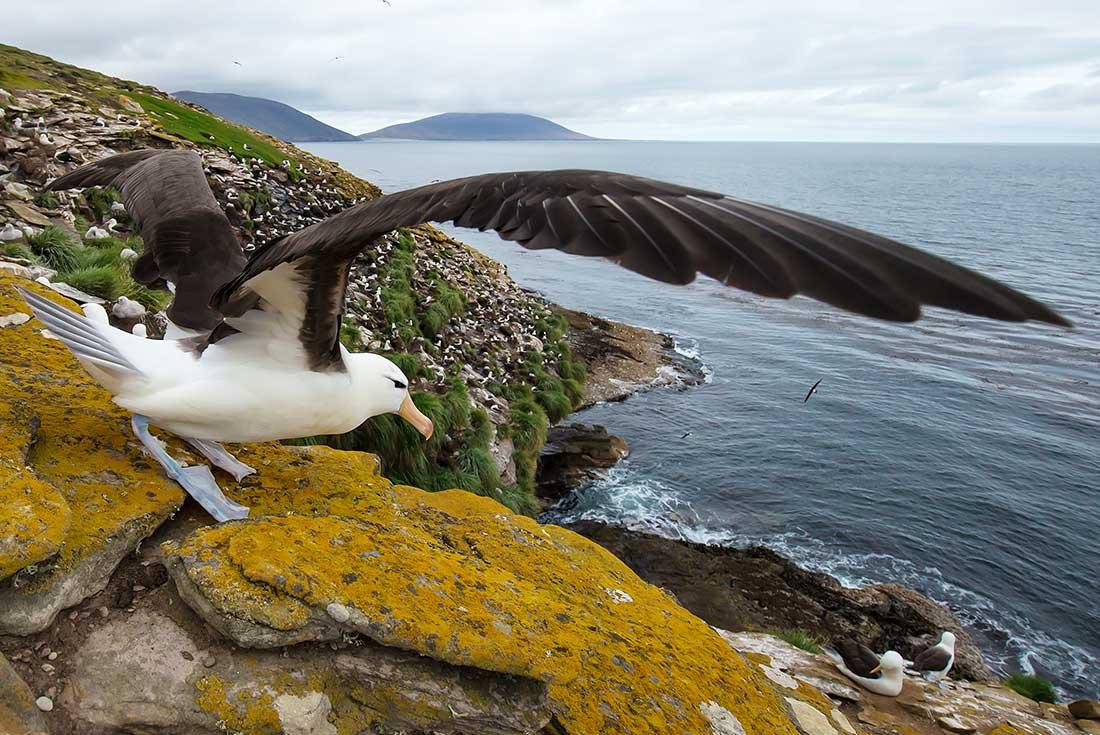 Falkland Islands Discovery 2