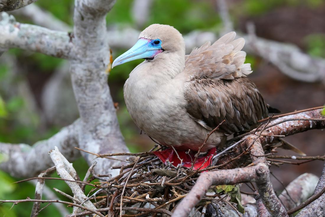 Galapagos Family Holiday 3