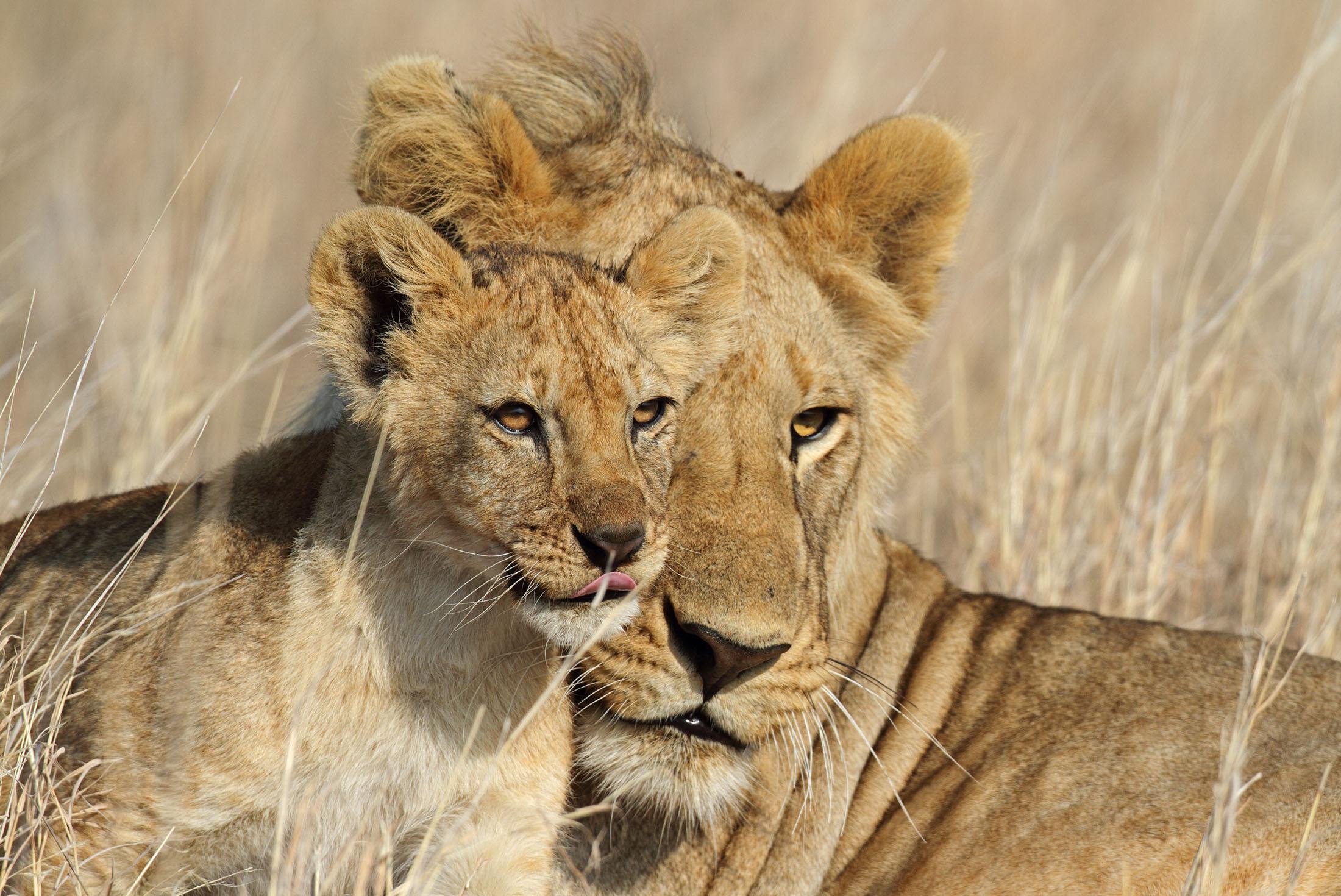 Tanzania Family Safari 2