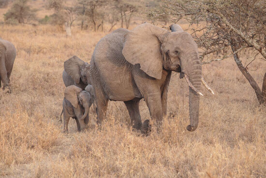 Tanzania Family Safari 3