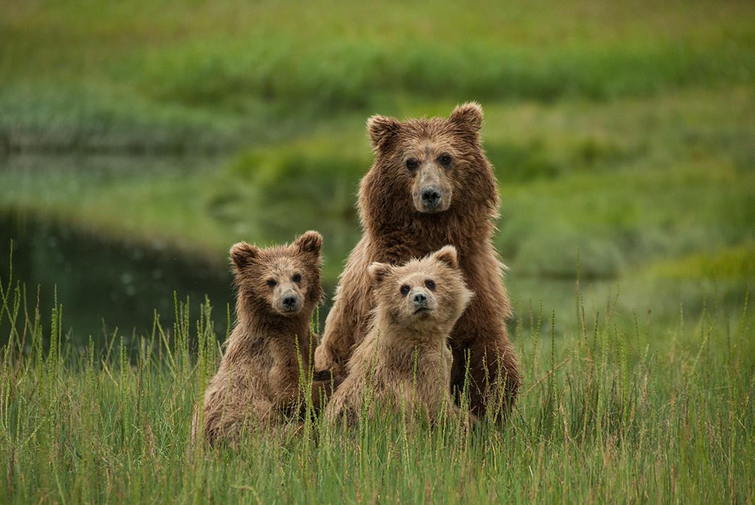 Alaska's Kenai Peninsula 3