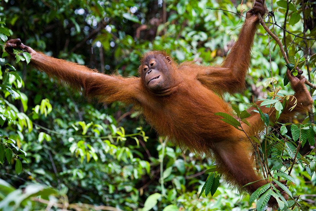 Borneo Family Holiday 2