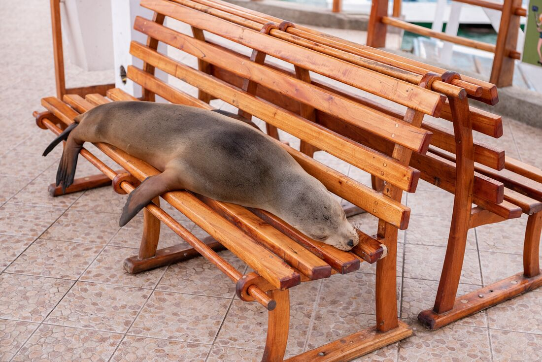 Galapagos Experience 3