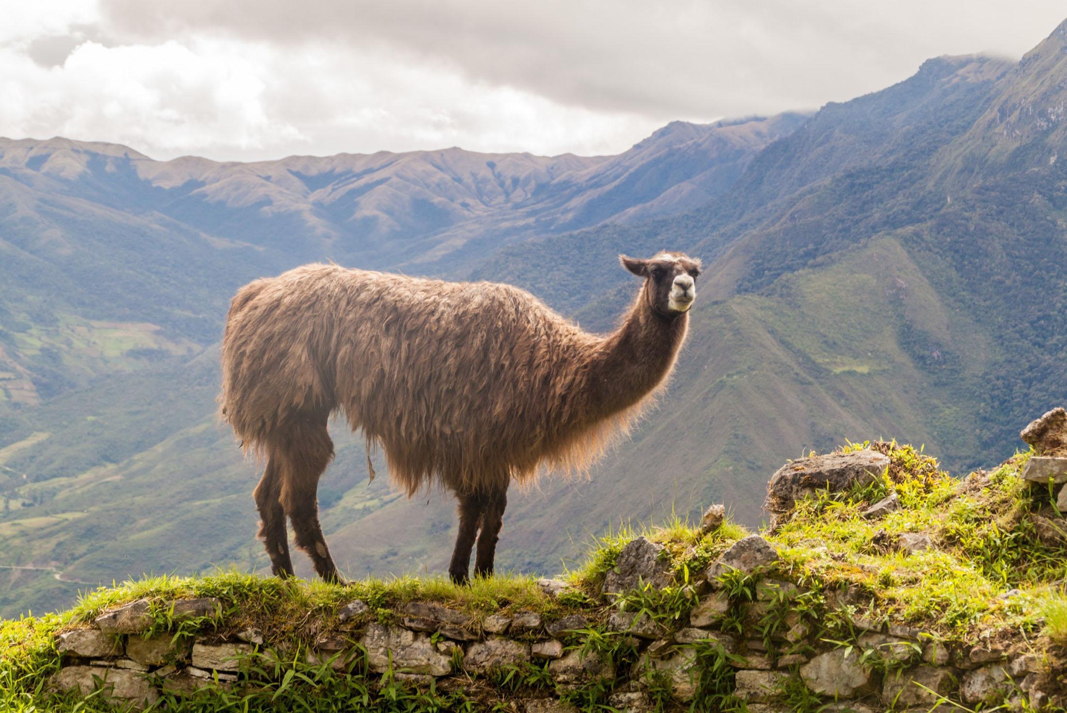 Northern Peru 2