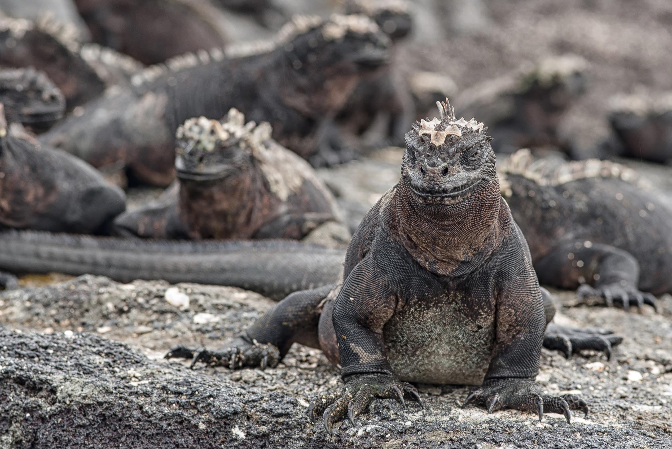 One Week in the Galapagos Islands 2