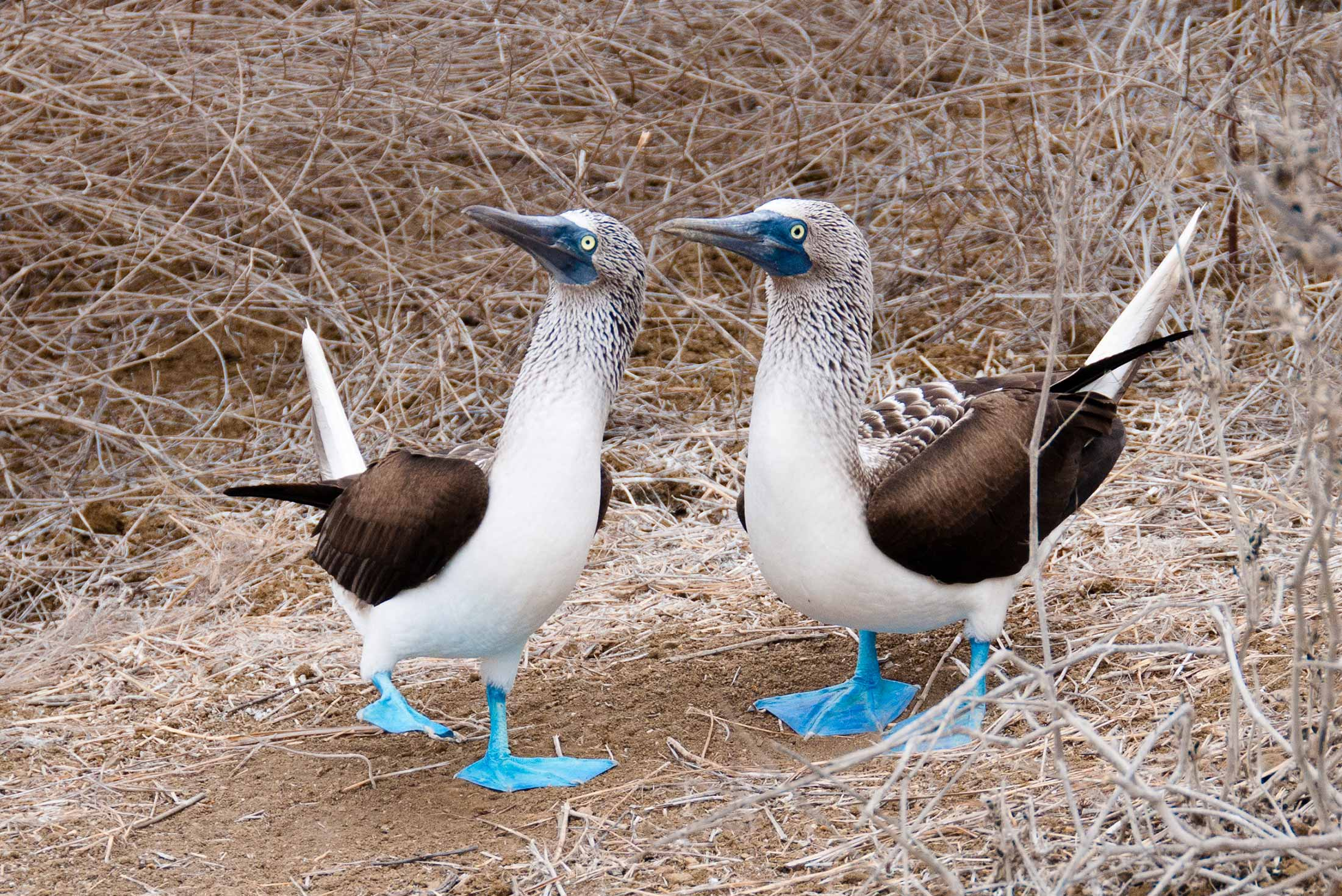 One Week in the Galapagos Islands 3