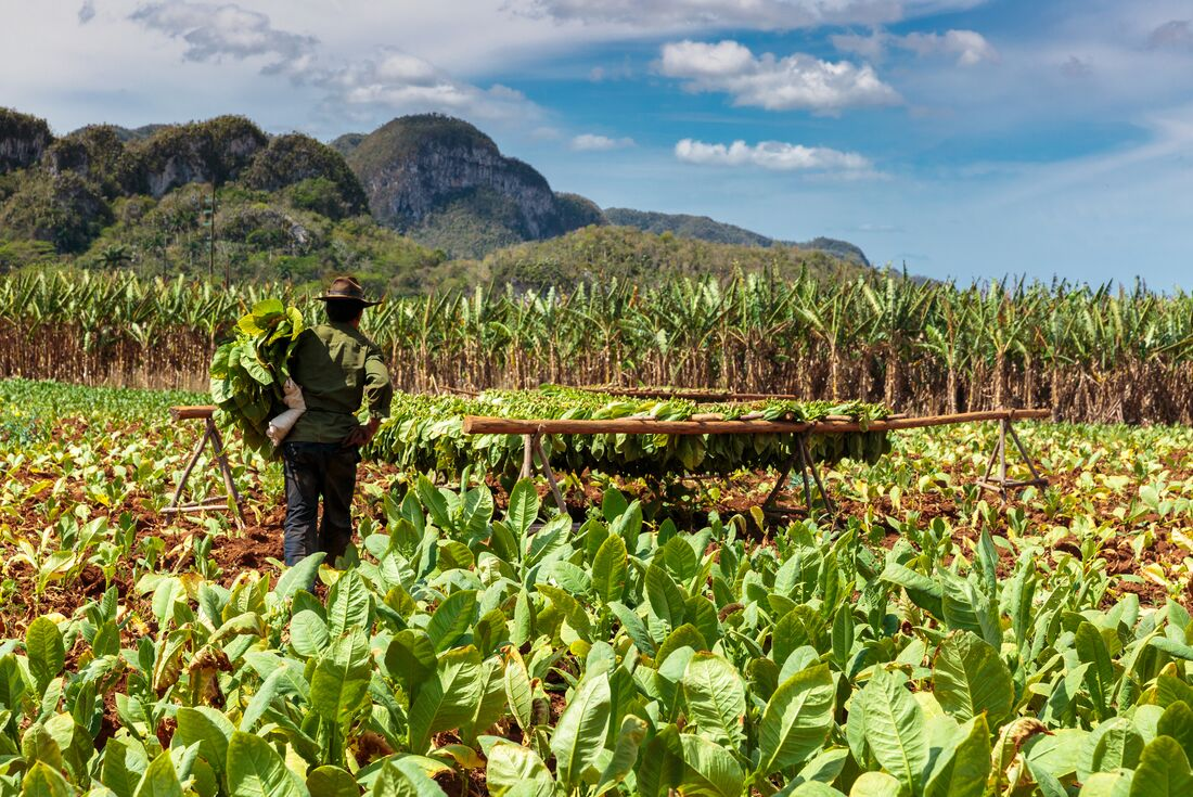 Western Cuba 4