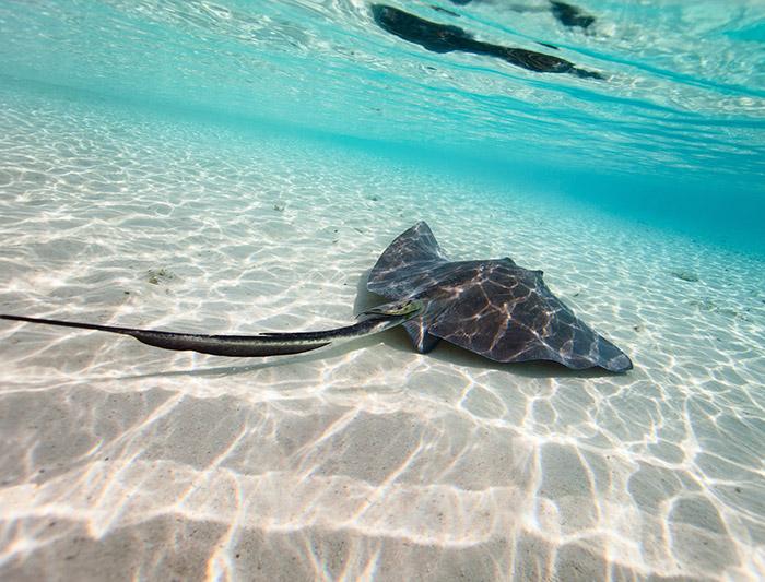 Bahamas Sailing Adventure 4
