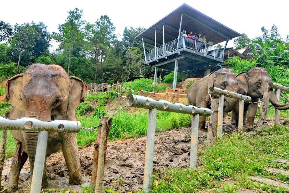 Chiang Mai & Elephant Experience 2