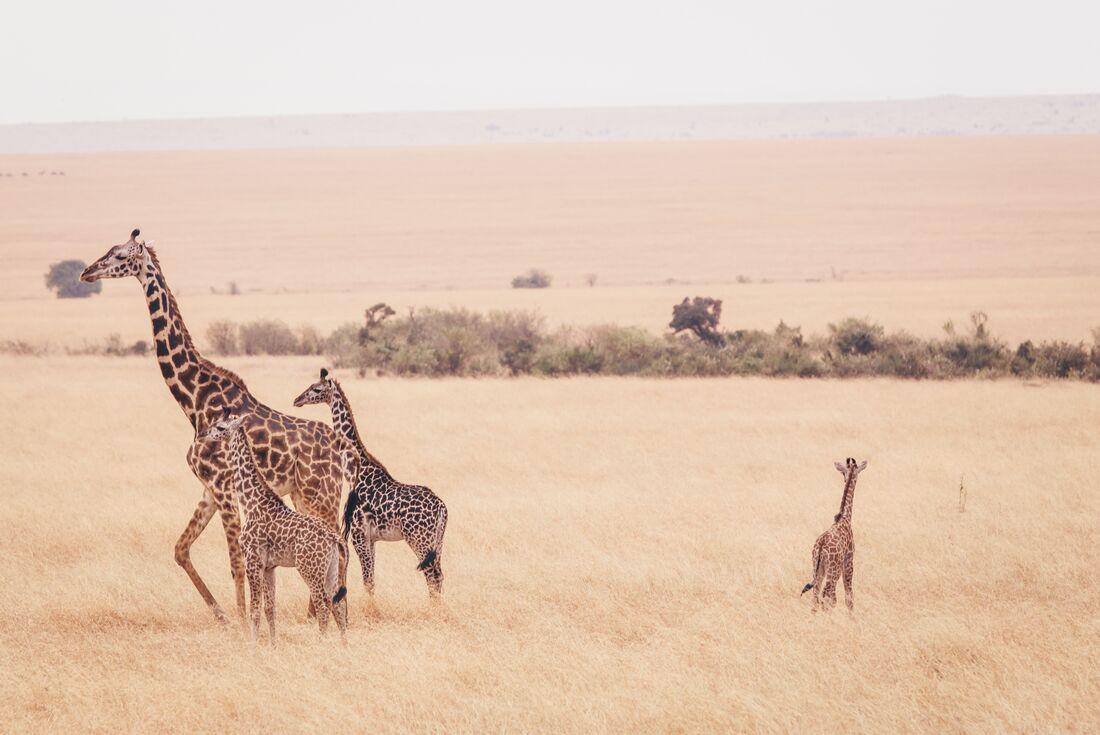 Real East Africa & Zanzibar 3
