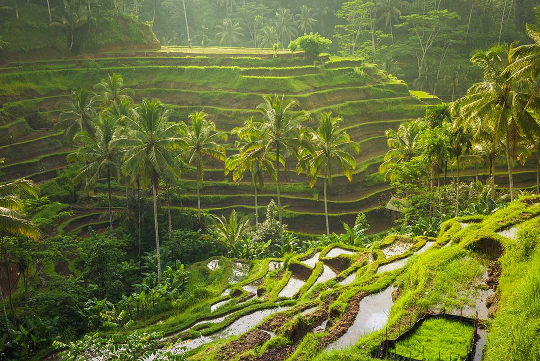 Beautiful Bali - For Solo Travellers