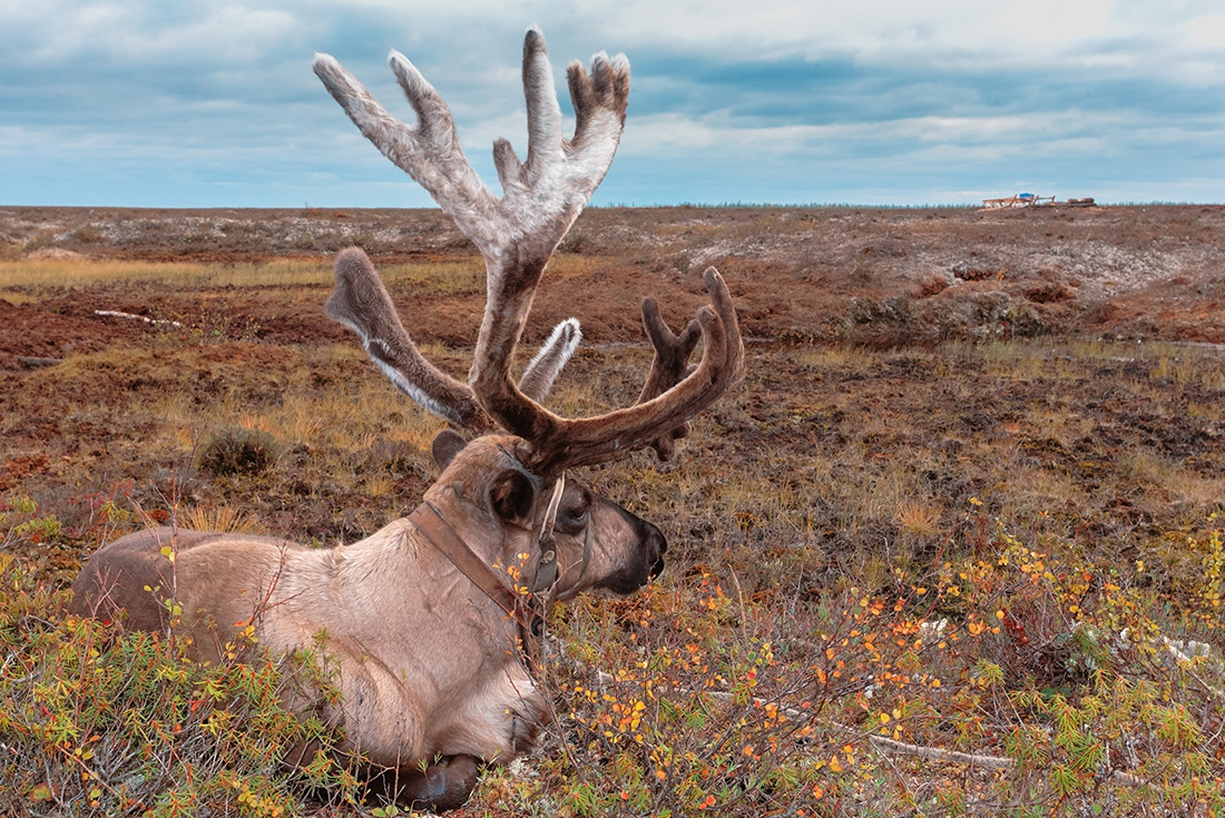 Russia Expedition: Footsteps of the Reindeer Herders 3