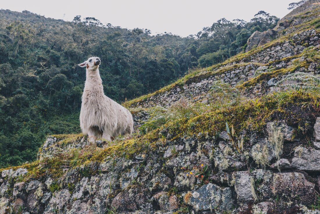 South America Highlights 3
