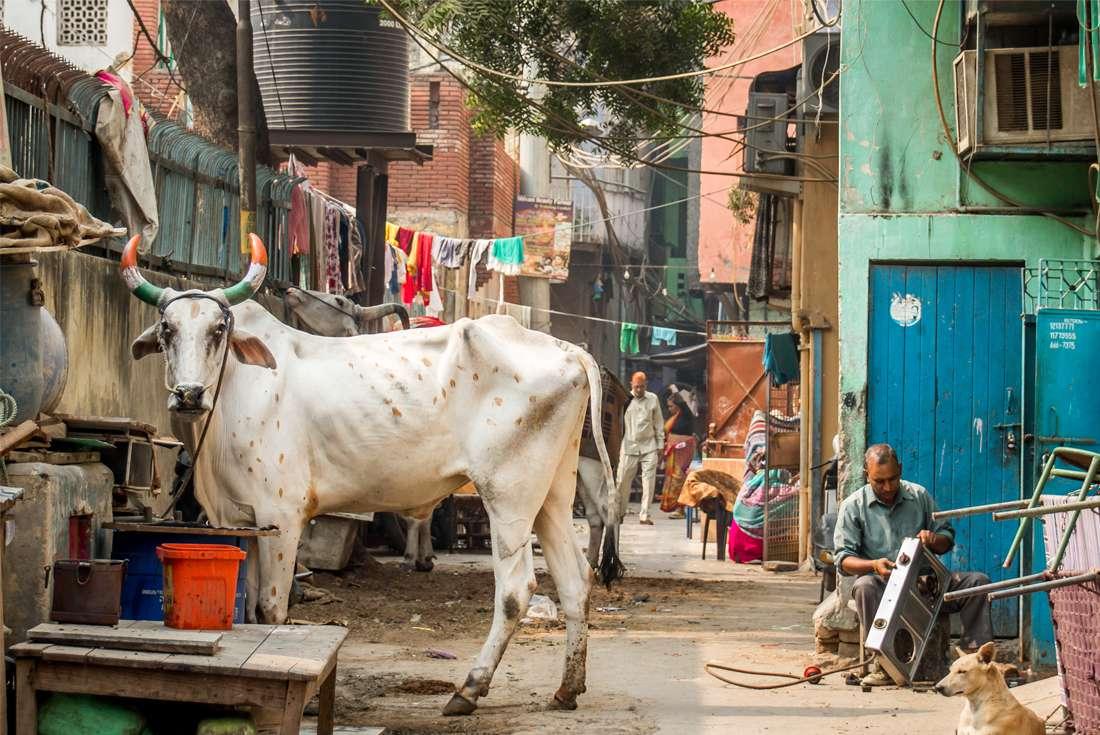 Delhi to Kathmandu 1