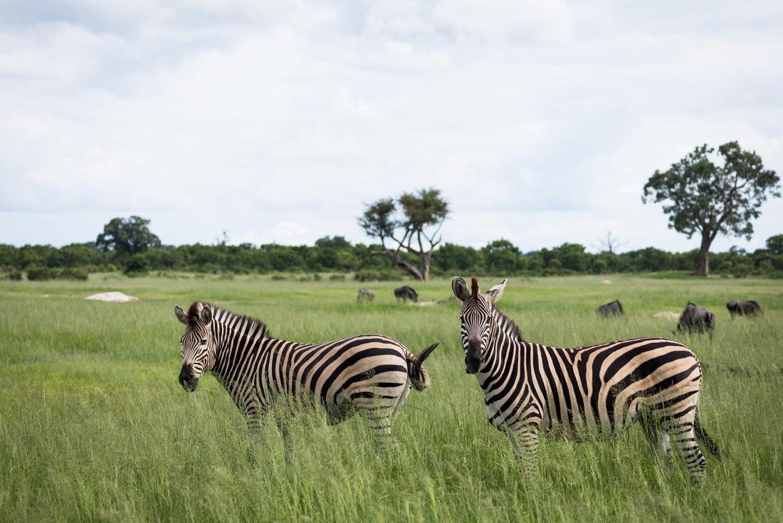 Southern Africa Safari 3