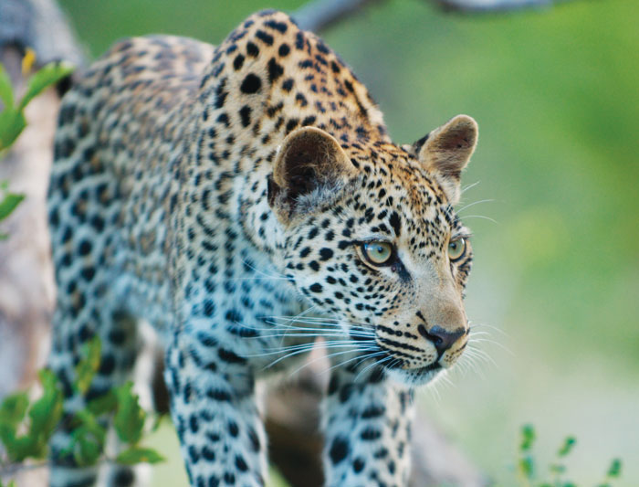 Kruger Experience - Lodge (3 days)