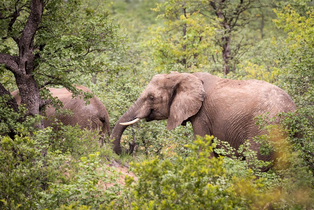 Kruger Lodge Experience (3 days) 3