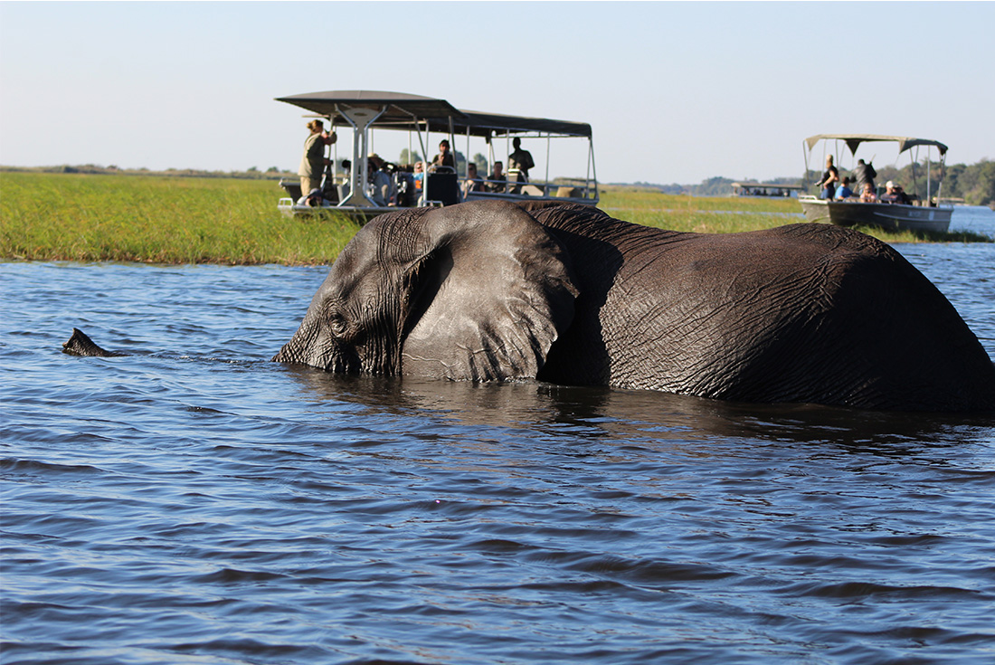 Chobe National Park Short Break