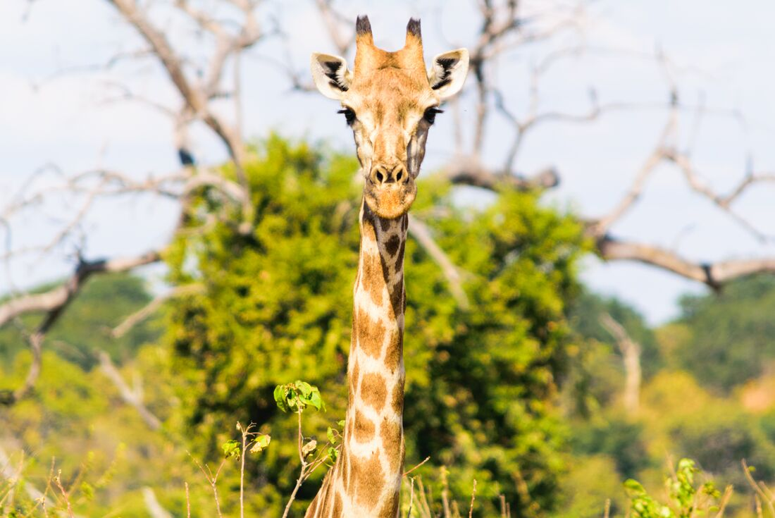 Amazing Southern Africa 2