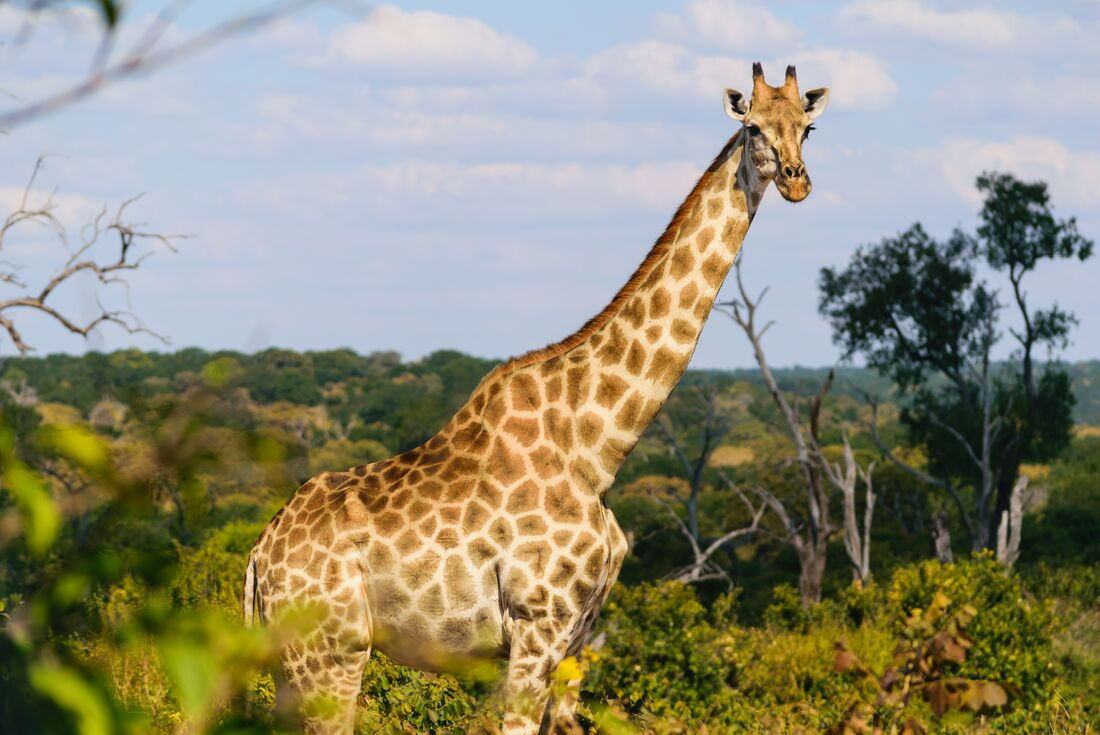Experience Southern Africa 2