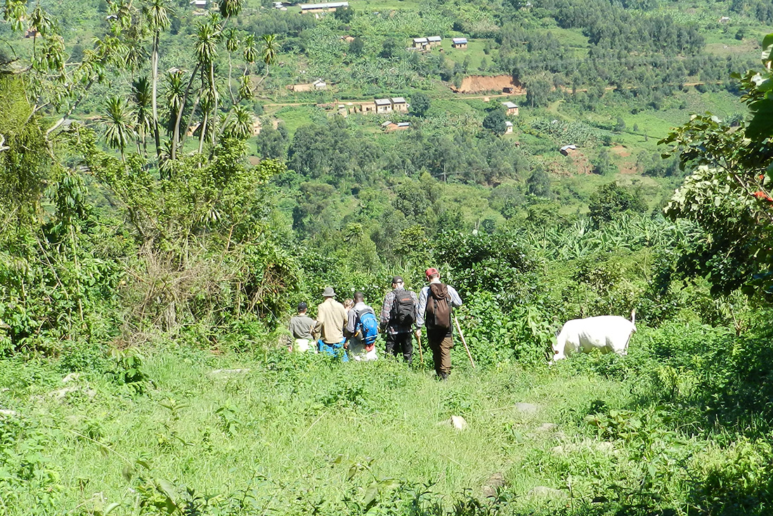 Uganda Gorilla Short Break 2