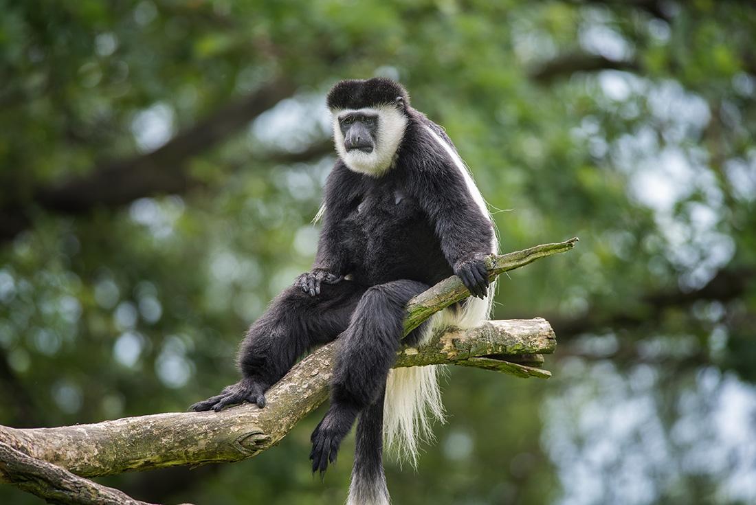 Uganda Gorilla Short Break 4