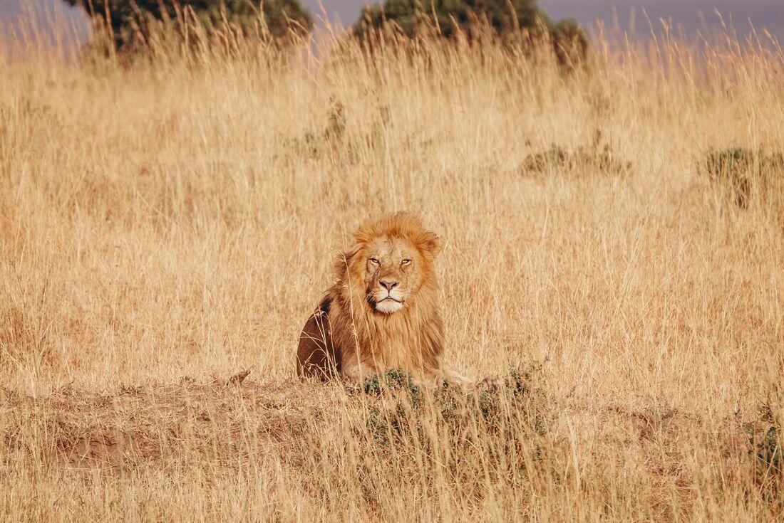 Masai Mara Walk 2