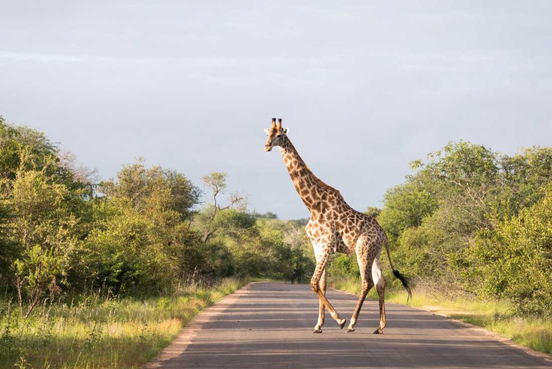 Southern Africa Adventure 4