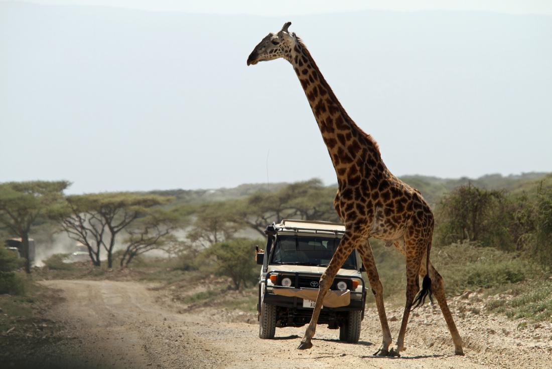 Zanzibar to Nairobi 2