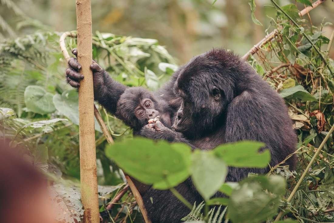 Vic Falls to Gorillas 2
