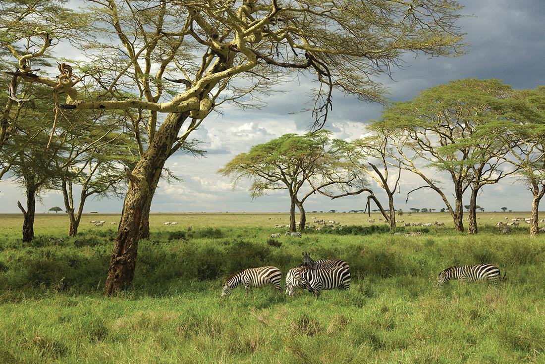 Road to Zanzibar 3