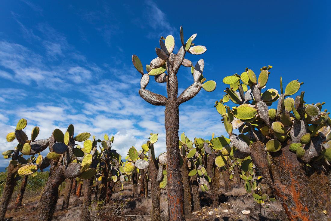 Galapagos Adventure: Northern Islands (Grand Daphne) 4
