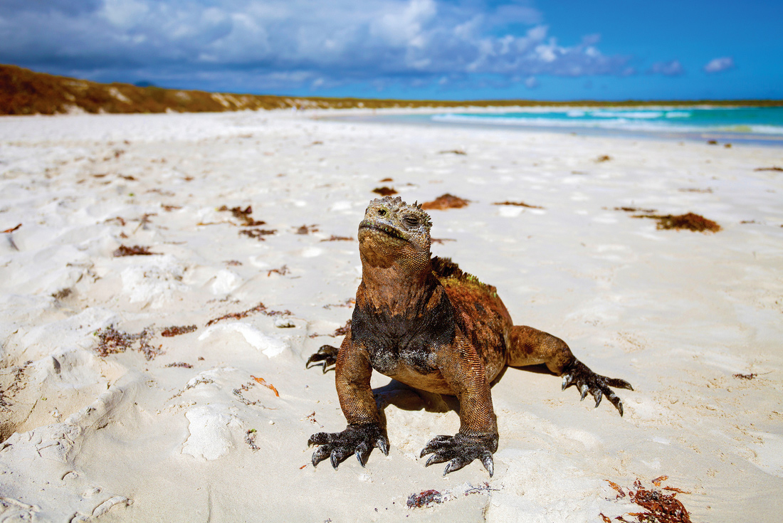 Ultimate Galapagos: Central Islands (Le Grande Daphne) 1
