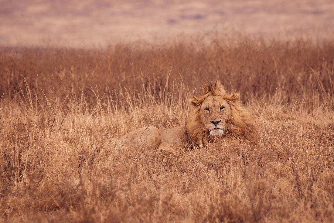 Serengeti Trail 3
