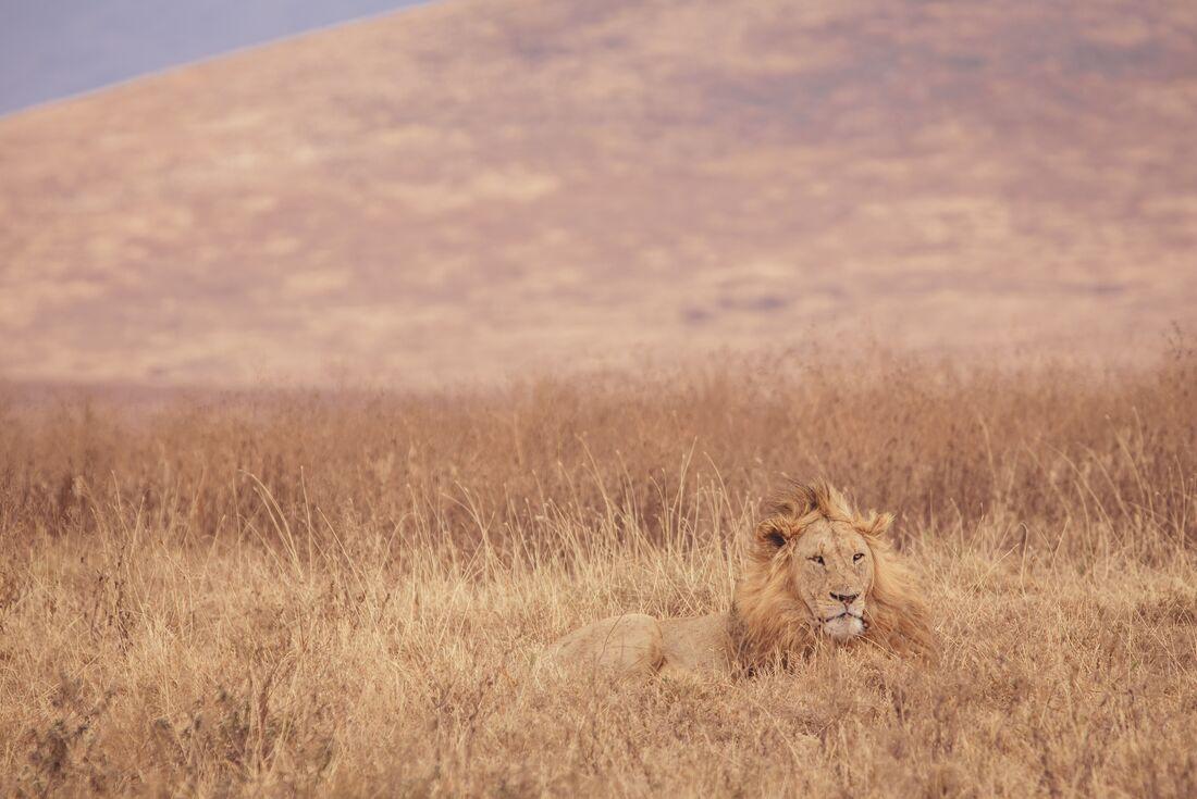 The Masai Heartlands 2