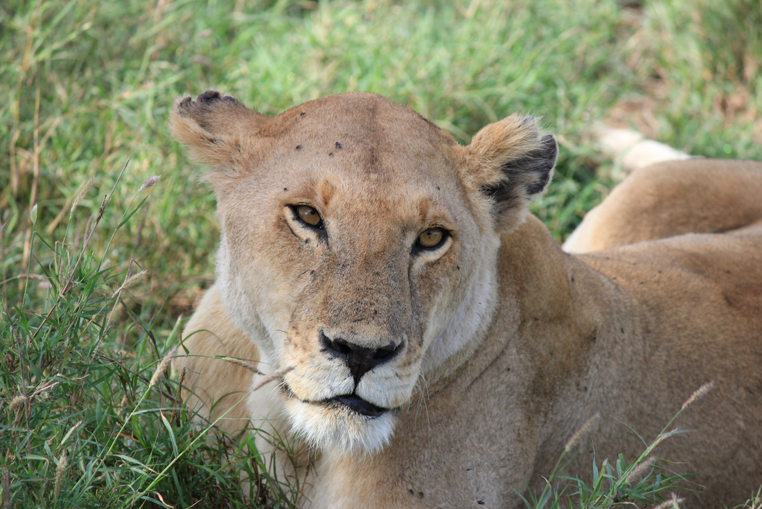 Tanzania Safari 2