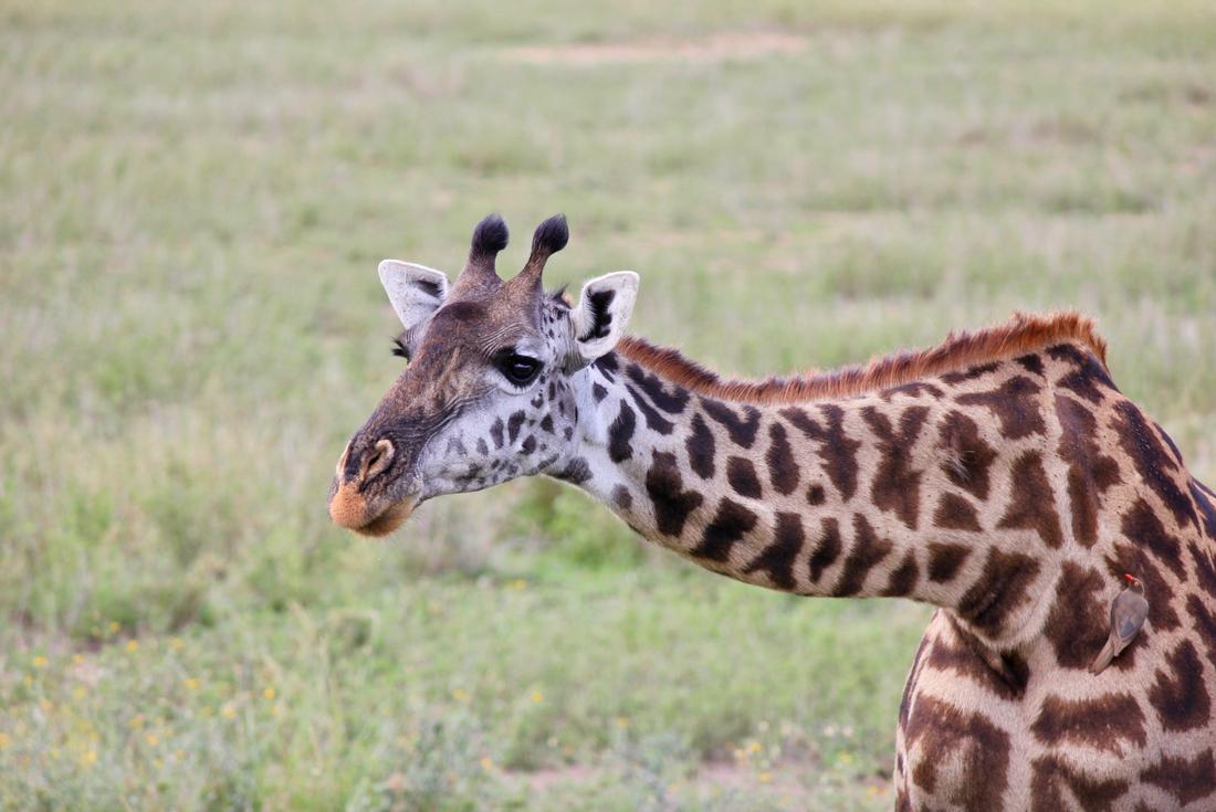 Kenya & Tanzania Safari 3