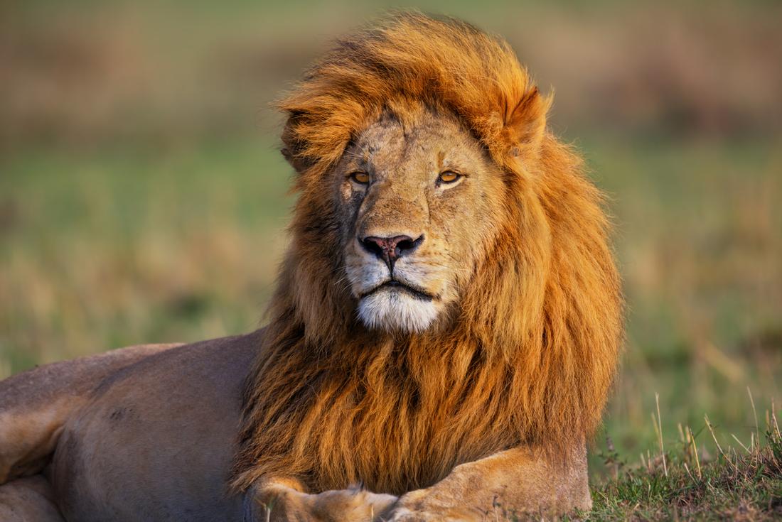 Kenya Safari 3