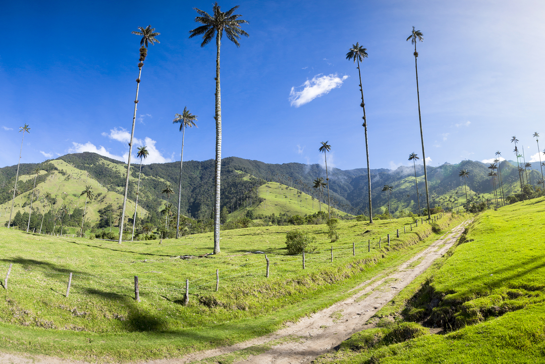 Cycle Colombia: Road Cycling 3