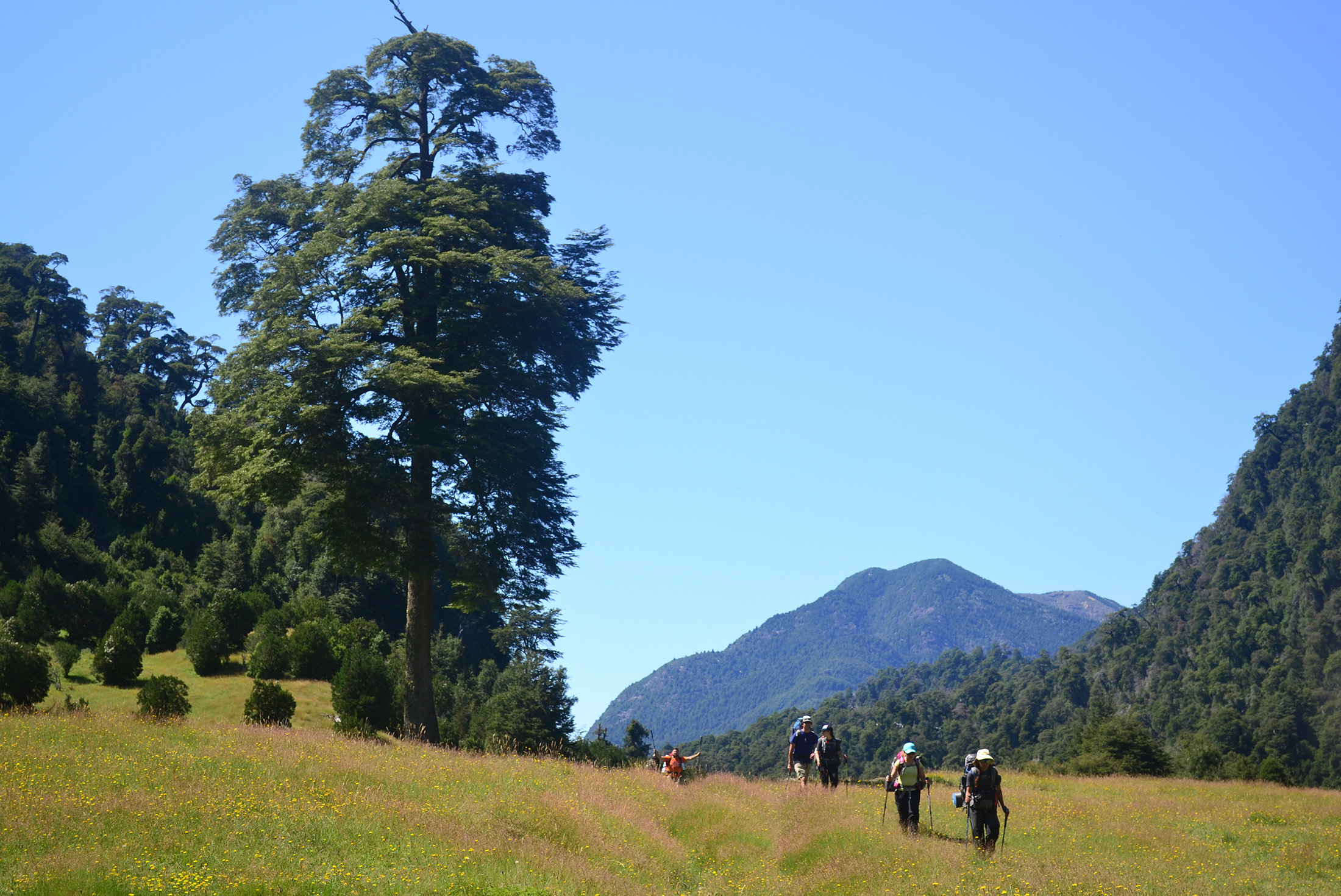 Patagonia: Trekking in the Andes 4