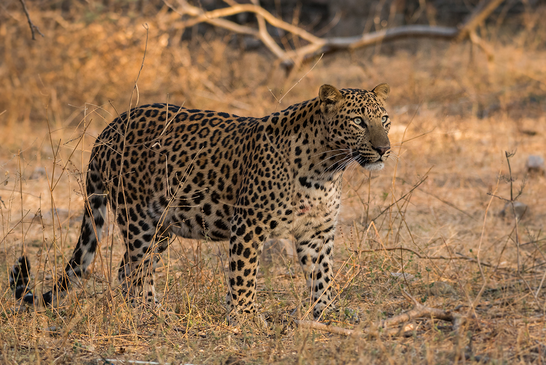 India Expedition: Wilderness & Wildlife 4