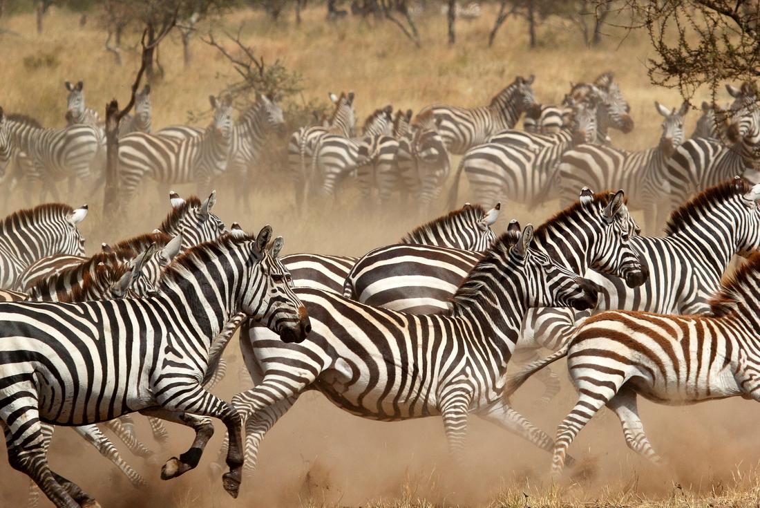 Gorillas & East Africa Safari 4