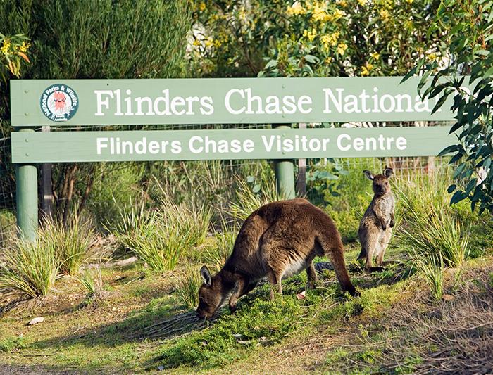 Kangaroo Island Adventure 2