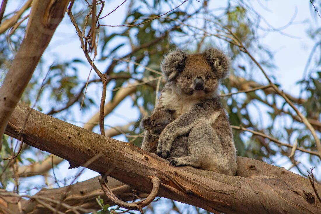 Great Ocean Road & Kangaroo Island Adventure 3