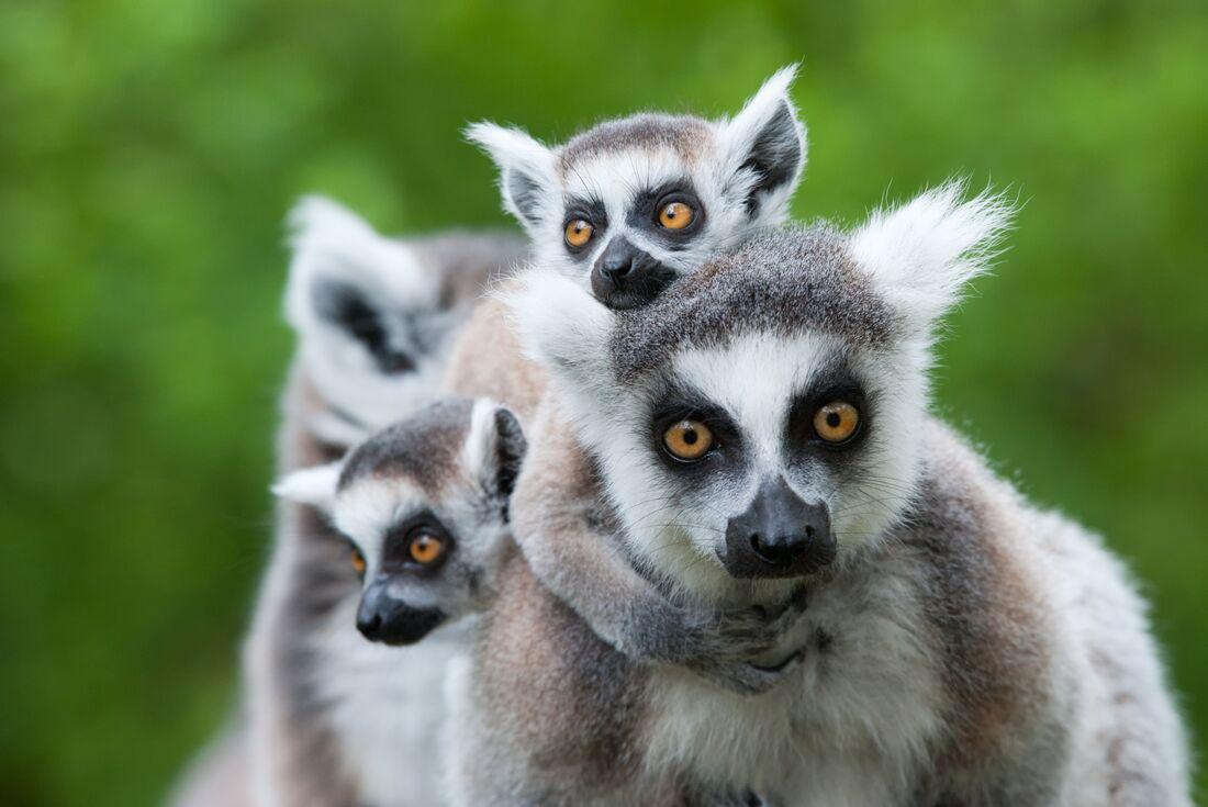 Madagascar Adventure 2