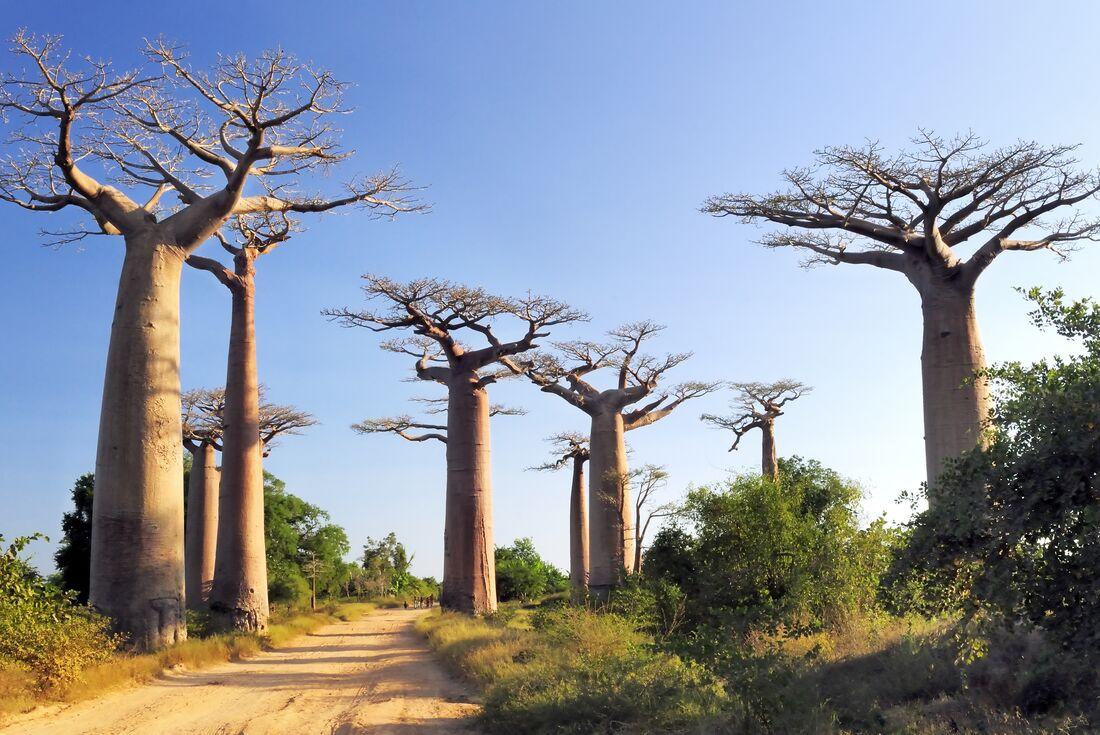 Madagascar Baobabs & Beyond 2